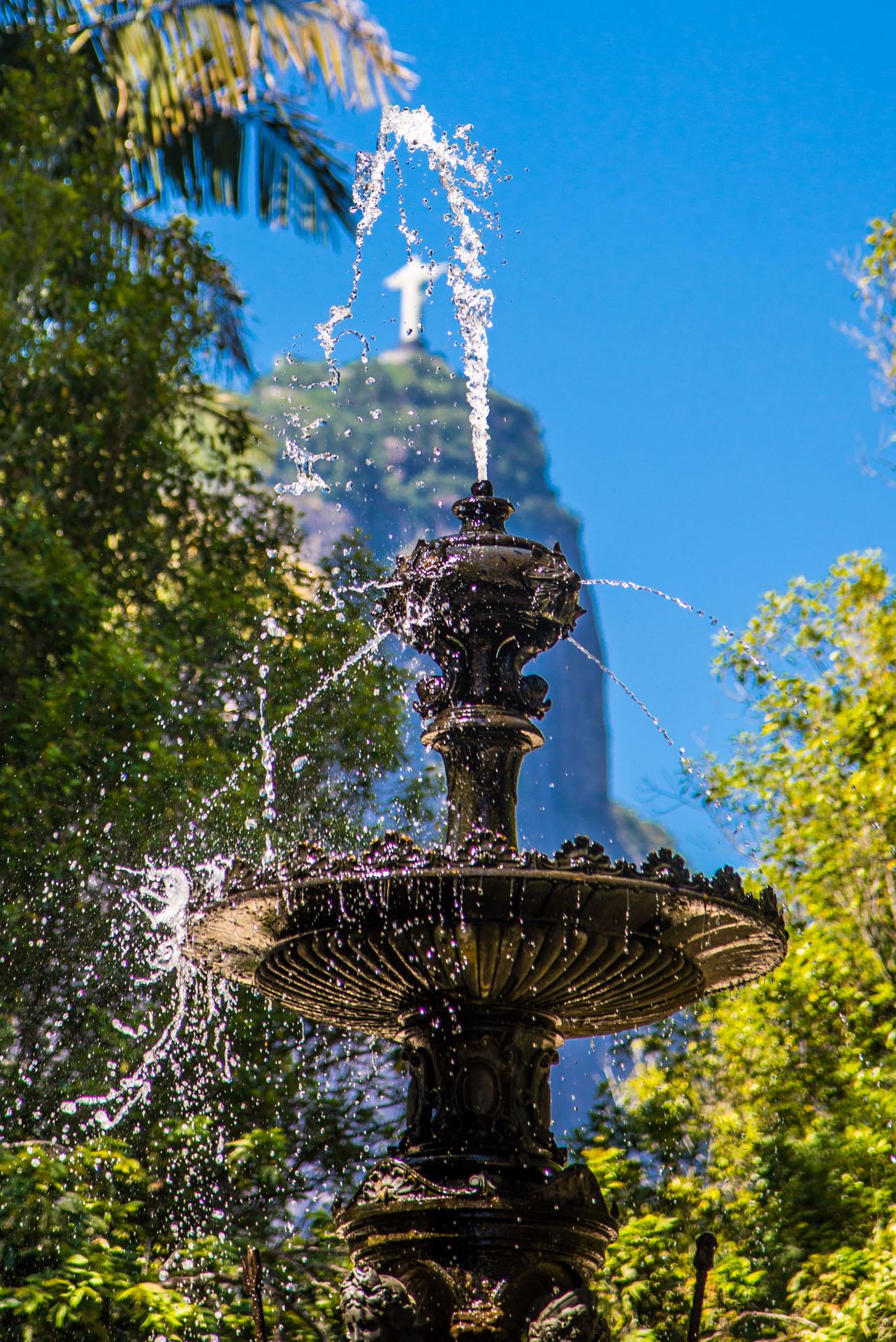 Jardim Botânico do Rio de Janeiro. 29/01/2014.